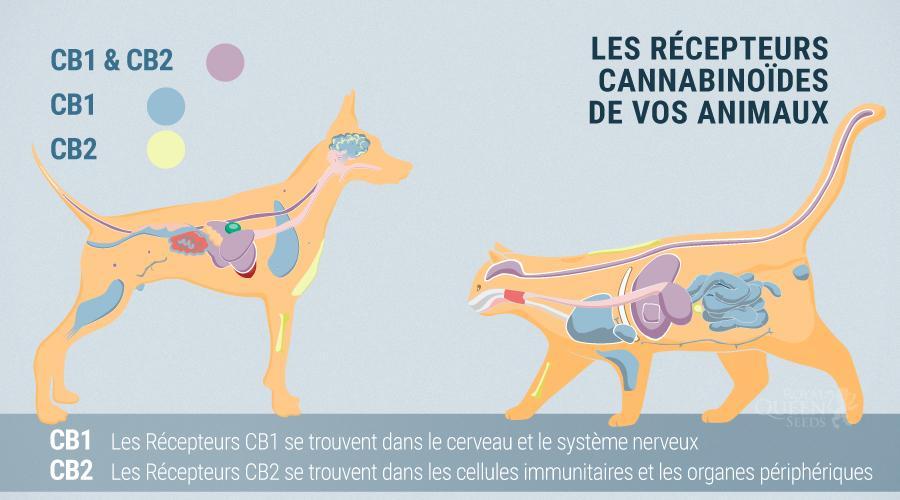 sistema endocannabinoide de animales